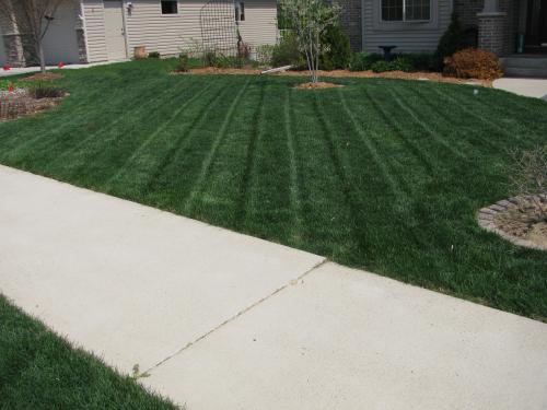 Example-Lawn mowed with an electric mower