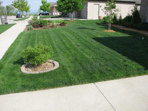 Example-Mowed lawn